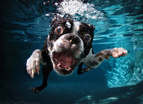 photo-of-dog-underwater-2