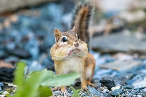these_funny_animals_1225_640_41