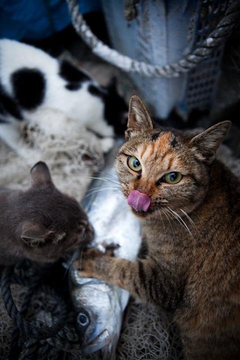 ainoshima-cats-3