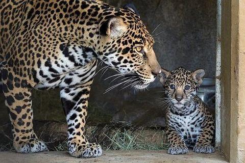 animal-mama-2
