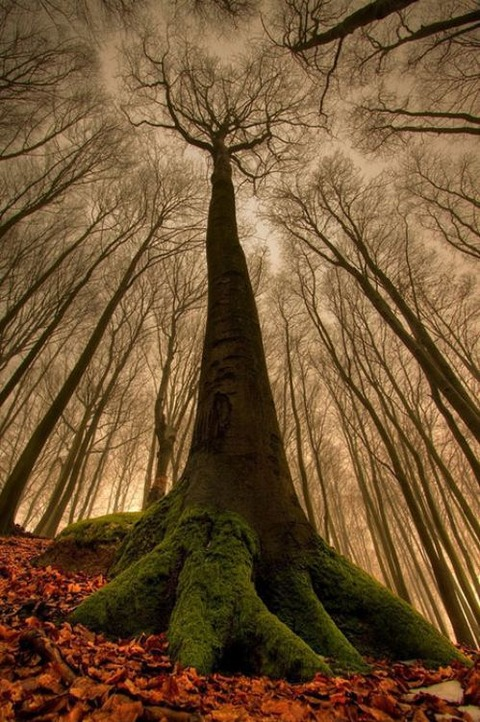 magical-trees-11