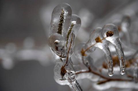 plants frozen in ice storm 27