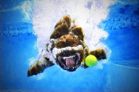 photo-of-dog-underwater-1