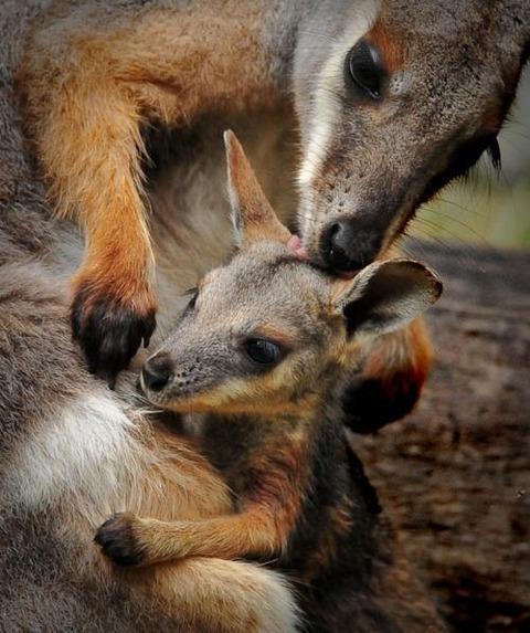 animal-mama-4