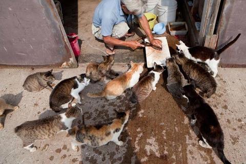 ainoshima-cats-6