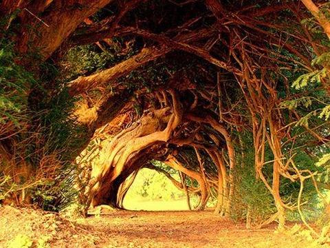 a-magical-trees-8