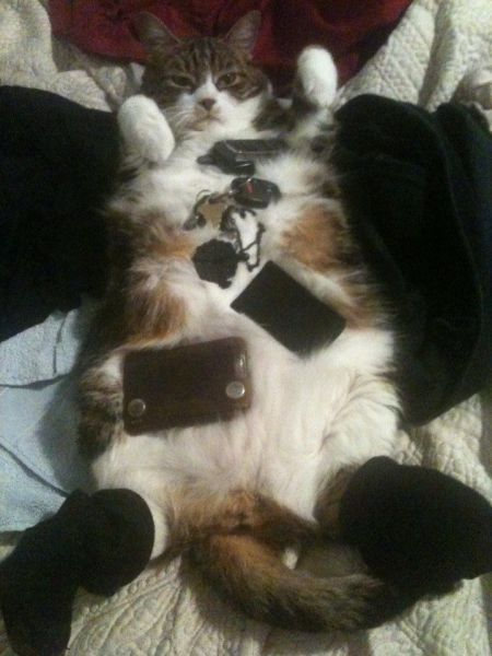 these_funny_animals_1220_640_41
