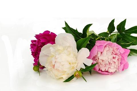 flower-3354875_640