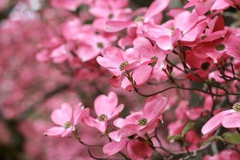 spring-4724825_640[1]