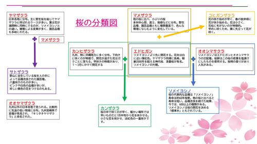 桜 分類図