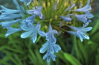 flower-3398663_960_720[1]