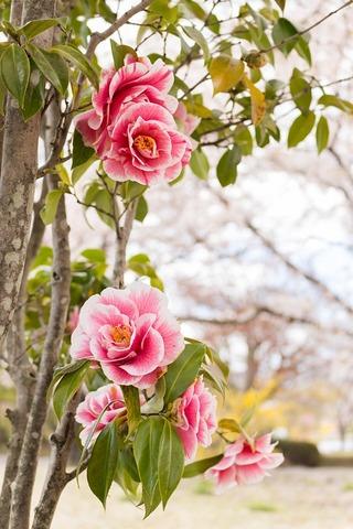 flowers-2253886_960_720