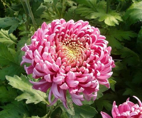 flower-569601_640