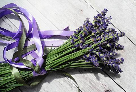 lavender-2395071