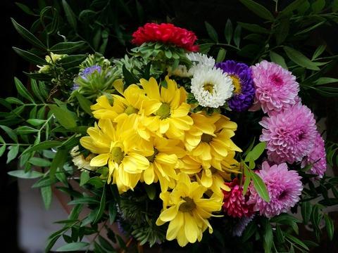 flowers-2732124_1920