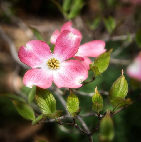 flower-1601067_640[1]