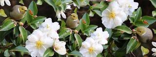birds-4507381_960_720