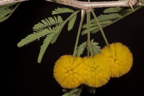 plants-670755_1920