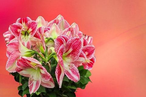 flowers-4087686_640[1]