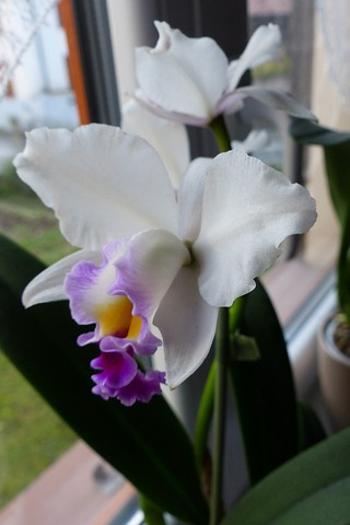 orchid-4818617_640