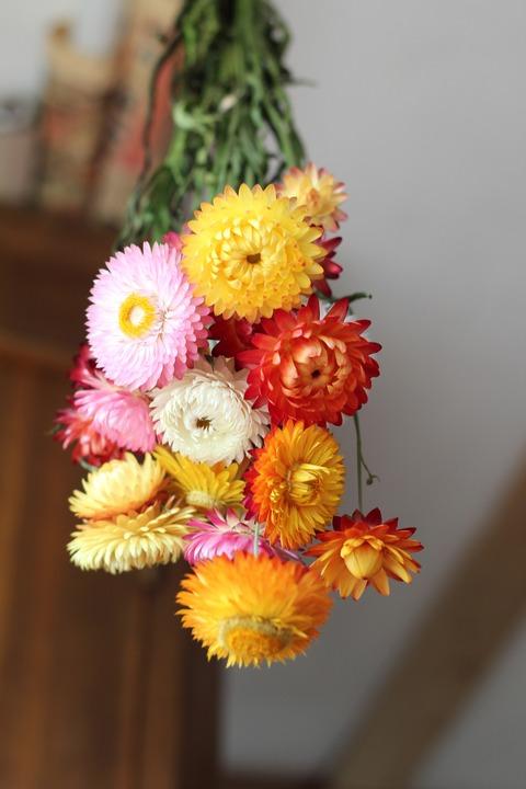 flowers-1587915_1920