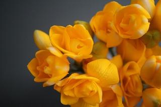 spring-flowers-4081954_1920