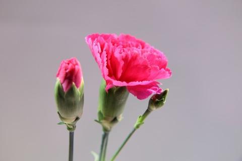 咲くつぼみと咲かない蕾