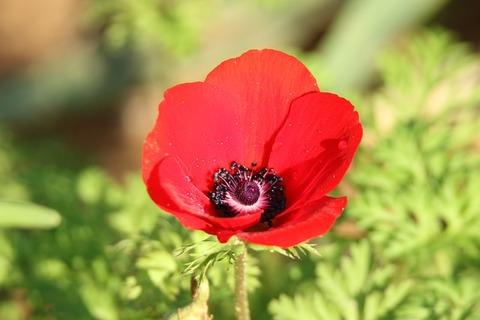 flower-3894049_640