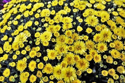 flowers-3705924_640