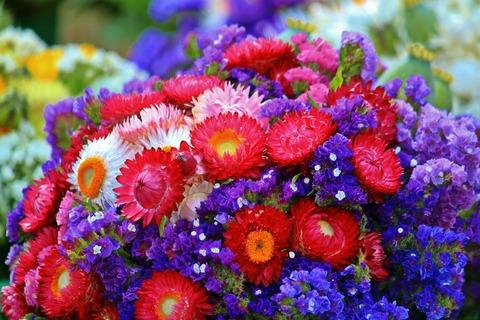 flowers-870031_1920