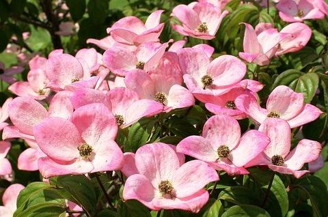 flowers-361456_640[1]