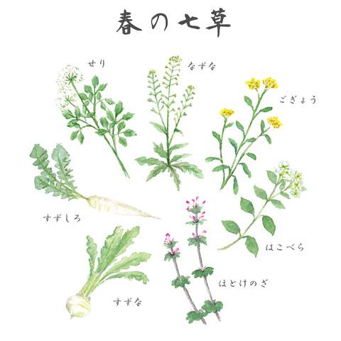 季節の花用「春の七草」