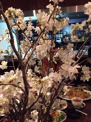 柳井さんの桜