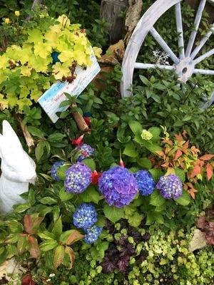 ガーデニング 廿日市 庭 ガーデン