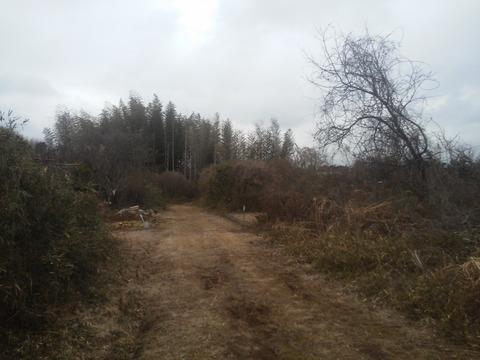 青山の放棄分譲地 (2)