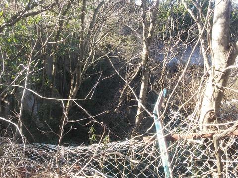 臼作の放棄住宅地 (10)