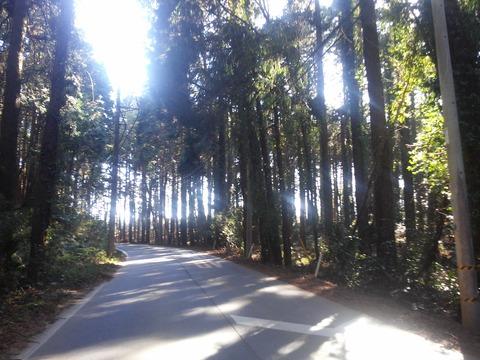 麻生新田 山林の分譲地 (1)