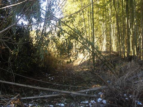 山田の放棄住宅地 (7)