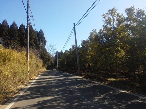 麻生新田 山林の分譲地 (2)