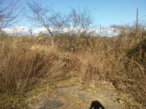 臼作の放棄住宅地 (19)