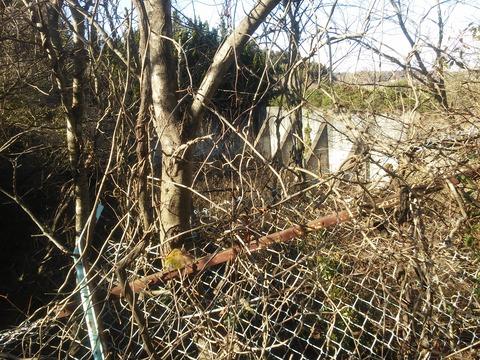 臼作の放棄住宅地 (9)