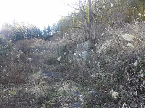 臼作の放棄住宅地 (3)