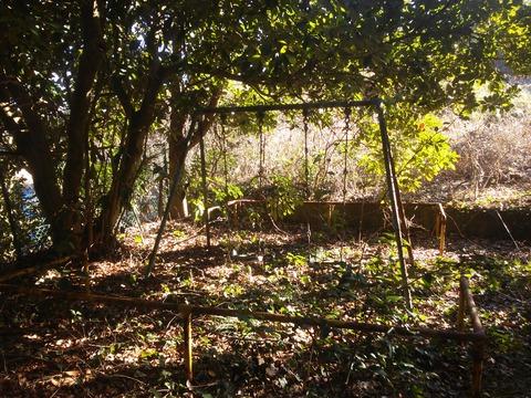 臼作の放棄住宅地 (36)