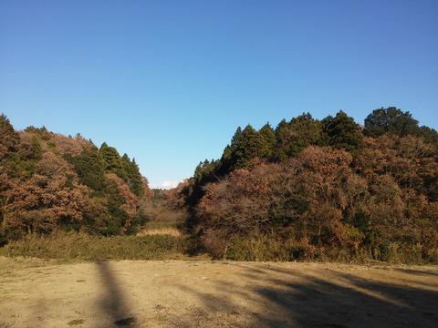 にっぽり団地 (15)