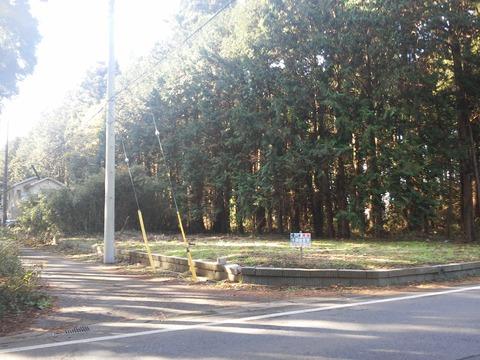山武市埴谷 雑木林の分譲地 (2)