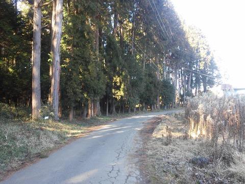 麻生新田 山林の分譲地 (3)