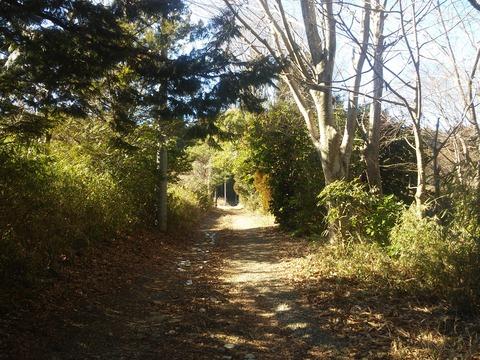 麻生新田 山林の分譲地 (19)