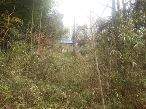 青山の放棄分譲地 (16)