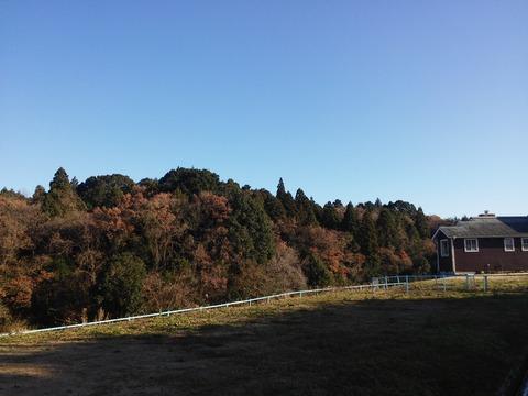 にっぽり団地 (14)