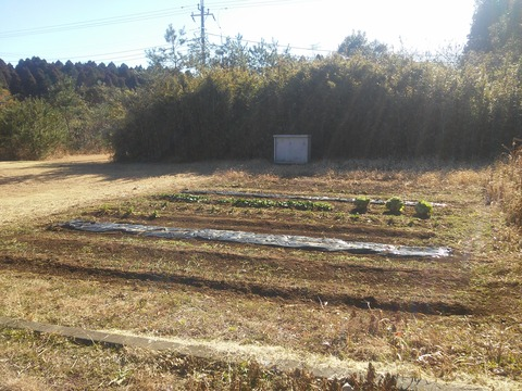 麻生新田 山林の分譲地 (7)